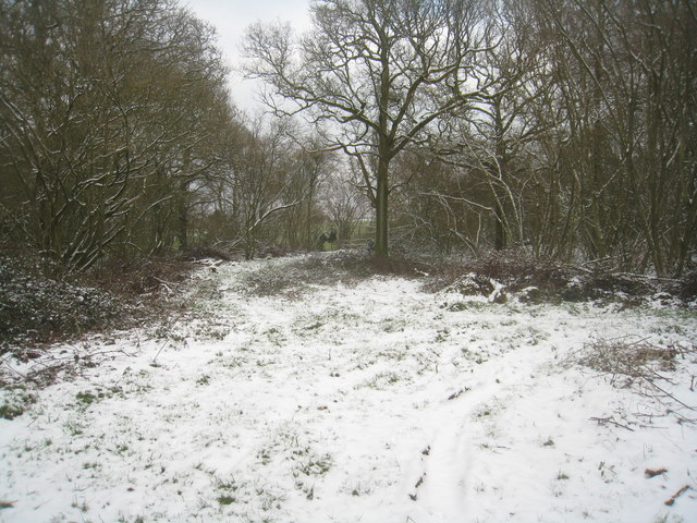 Eastern edge of Well's Copse