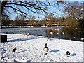TQ3096 : Waterfowl at Boxer's Lake, Enfield by Christine Matthews