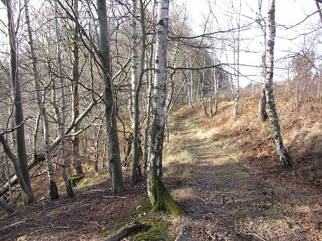 Clacherdean Wood