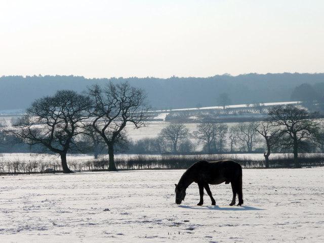 Horse Grazing, The Ridgeway, Enfield
