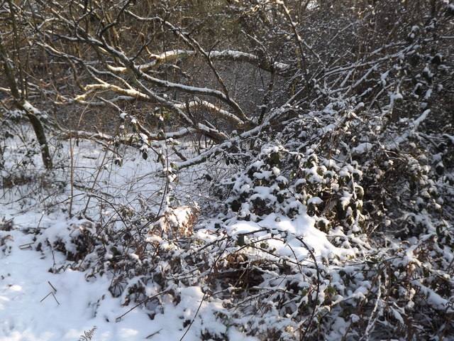 Wintry North Downs Way