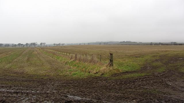 Fields by Stenton