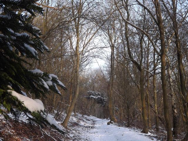 Woodland on North Downs