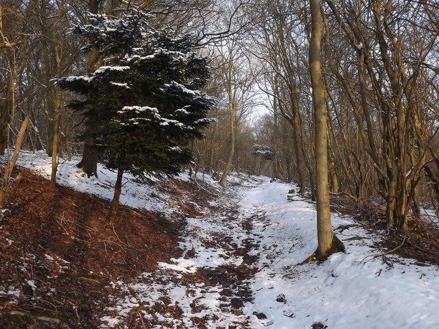 Bridleway on North Downs