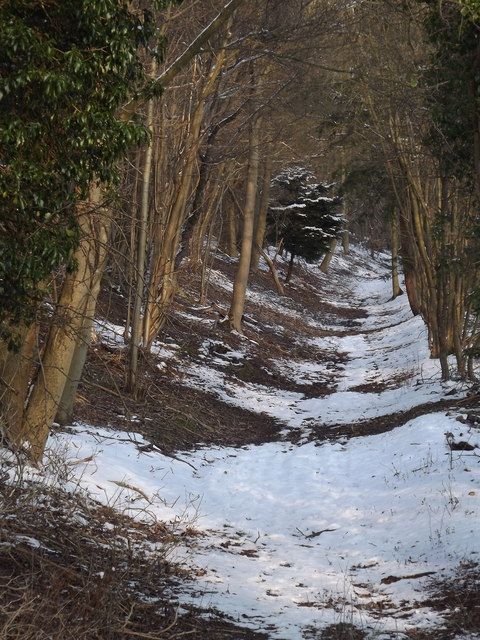 Old Trackway, North Downs