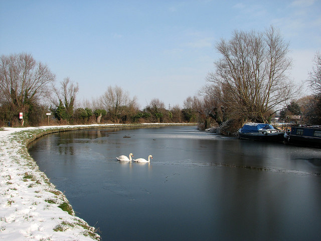Fen Ditton: thin ice and swans