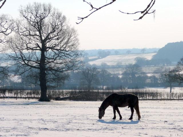 Horse Grazing, Farmland, Botany Bay, The Ridgeway, Enfield
