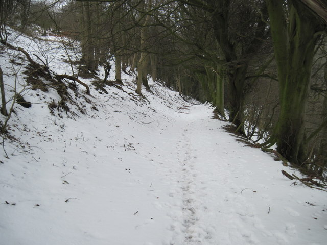 The  Path  down  Newton  Banks
