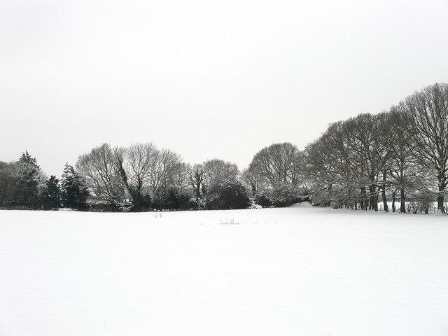 Street Field