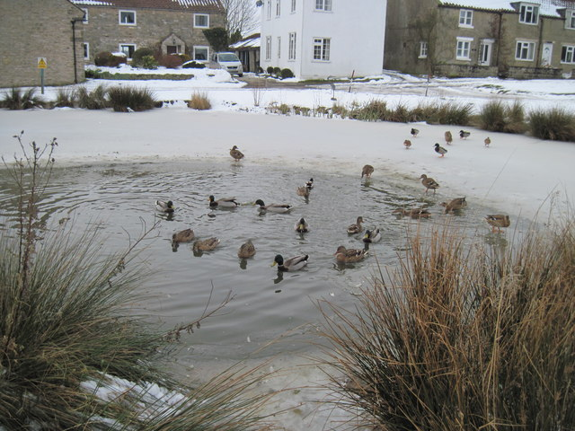 Wintery  Village  Pond