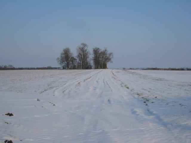 Plantation and snow