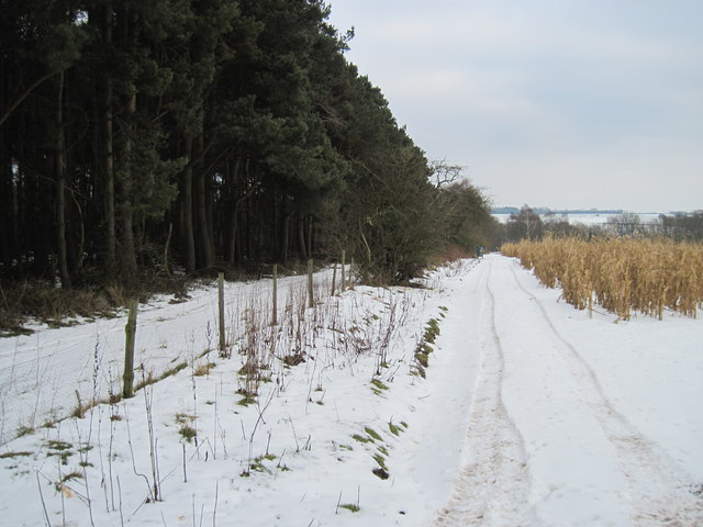 Woodland  Edge  and  Ground  Cover/ Food  for  Game  Birds