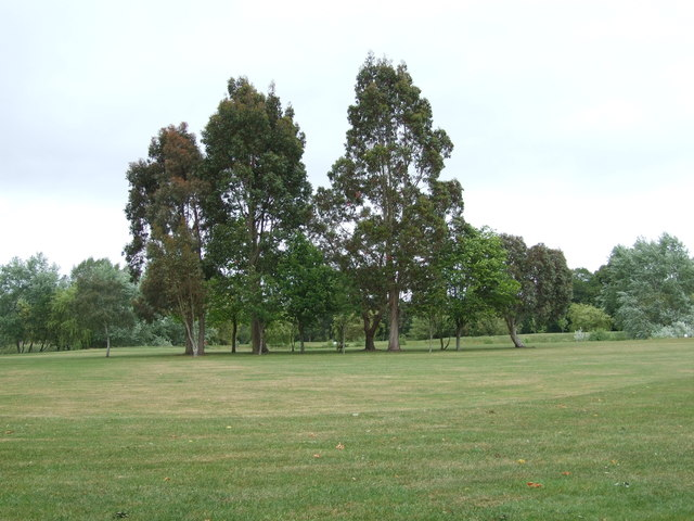 Trees On Canford Magna Golf Course