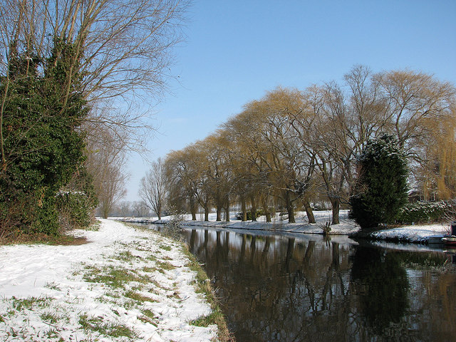 Horningsea: willows in the snow