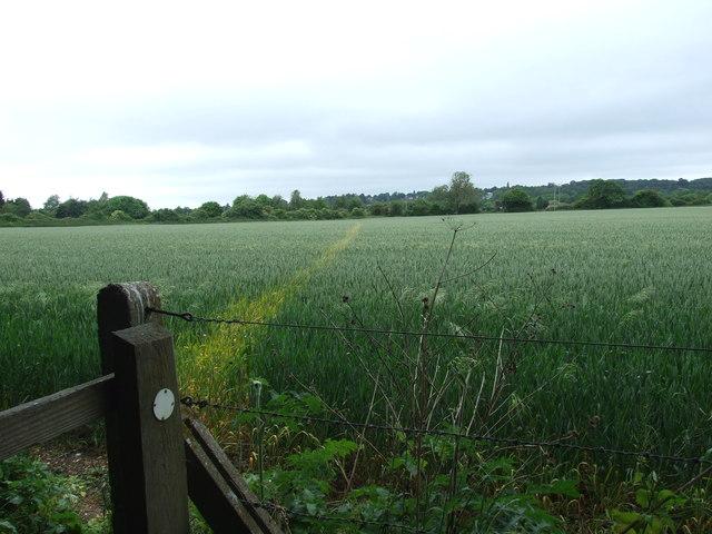 Footpath Towards Wimborne Minster