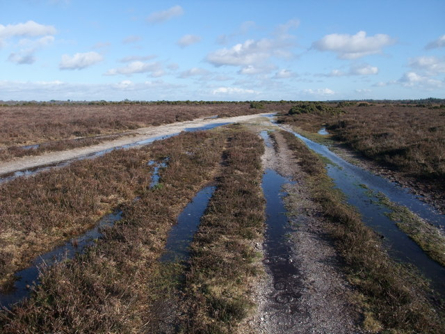 Holmsley Ridge, New Forest