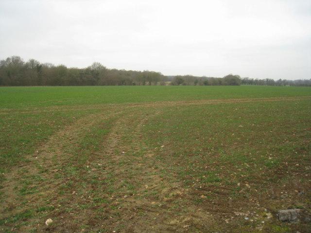 Winter crop in East Field (37.5 acres)