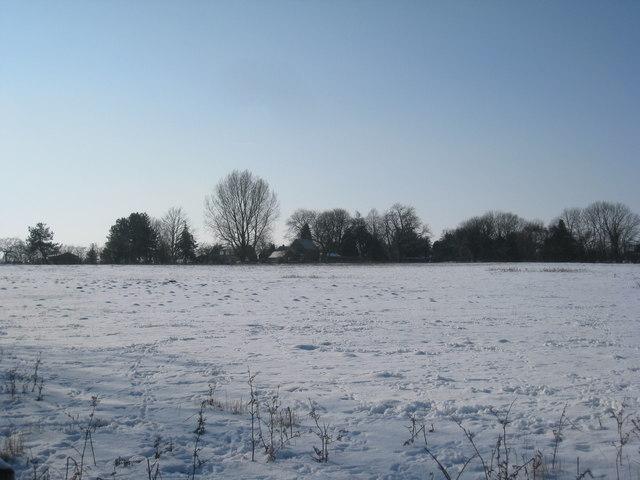View towards Willow Tree