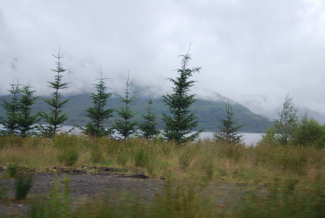 Conifers on the shore of Loch Linnhe