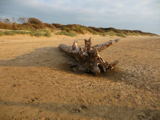 Berrow - Washed Up Tree