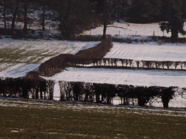 Hedgerow-lined Fields