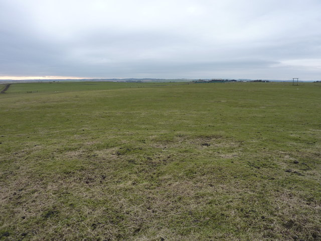 Sheep pasture behind the dunes