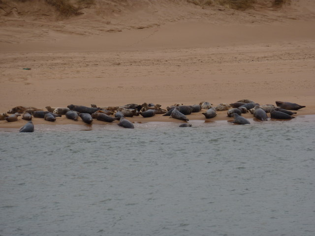 Seals on the sand