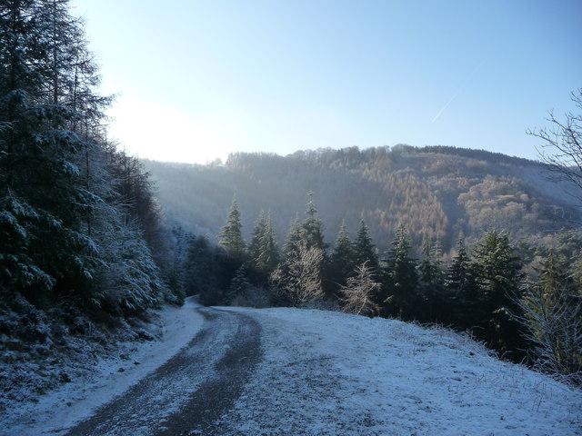 Track high in the forestry plantation above Cwm Gwyddon