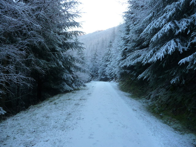 Forestry track in winter