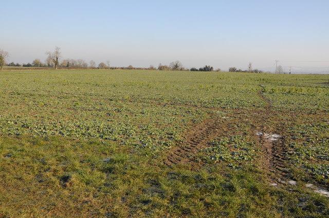 Arable land at Whitminster