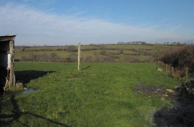 Pasture near Kellacott
