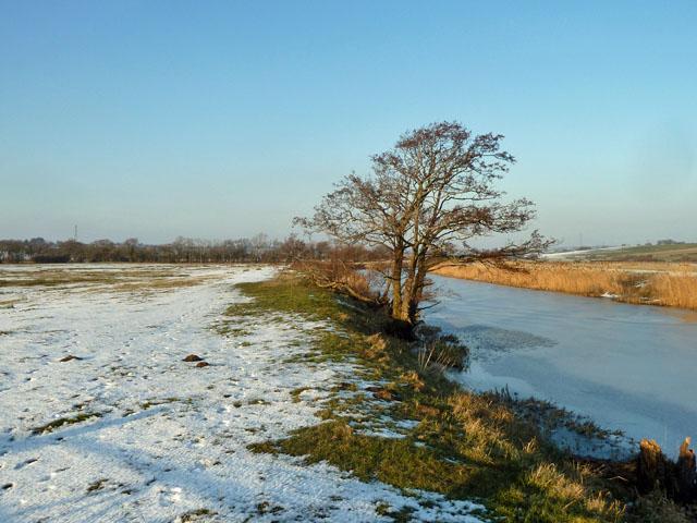Alder by a frozen Waller's Haven