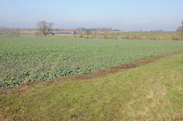 View to Nastfield Farm