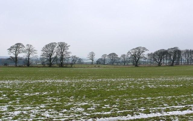 Fields and winter trees north of Nesbitt Hill Head