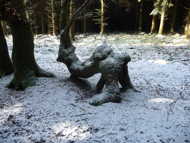 Misshapen tree near Ysgubor Wen below Mynydd Maen Common