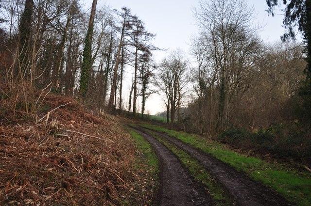Mid Devon : Path through Upcott Woods