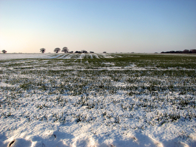 Snowy field east of Coles Green Farm