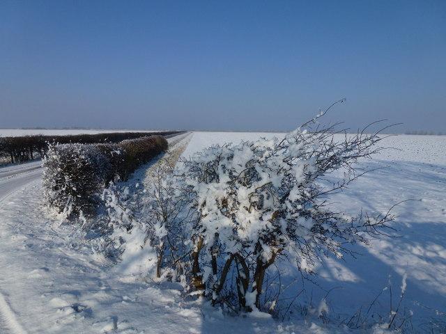 Barge Road in winter, Holbeach St Matthew