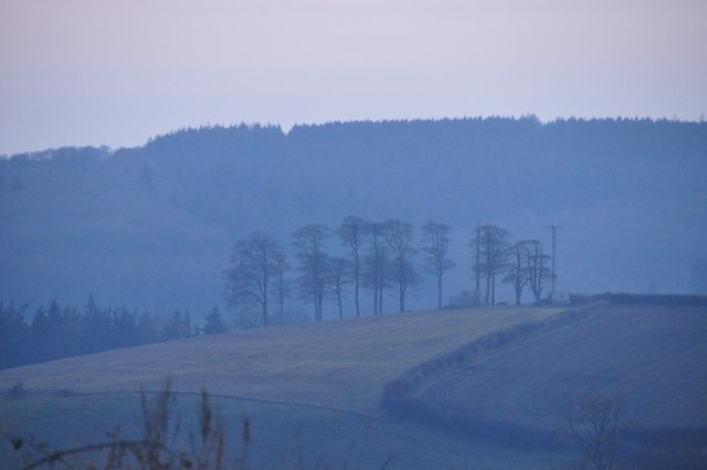 Mid Devon : Trees & Fields