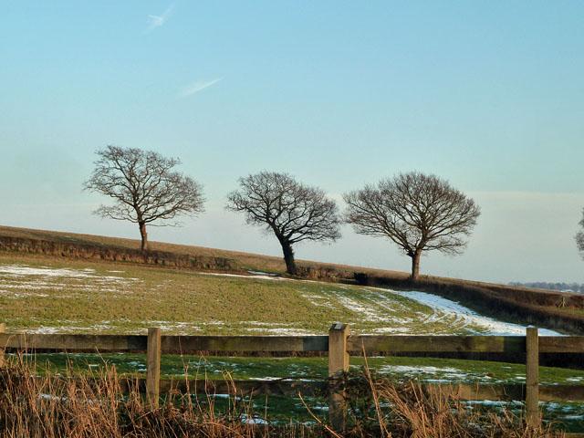 Three hedgerow trees