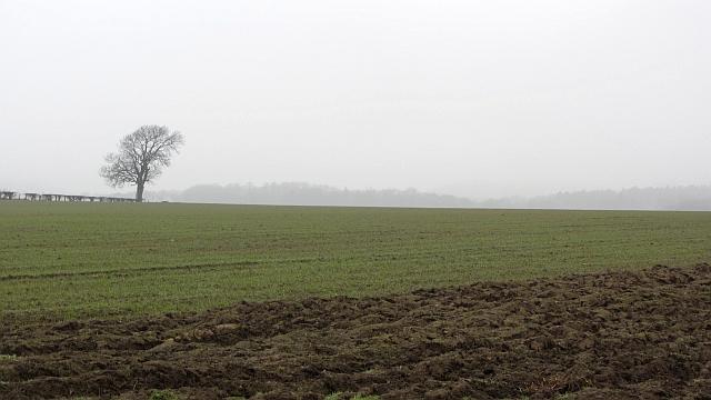 Arable land near Letham