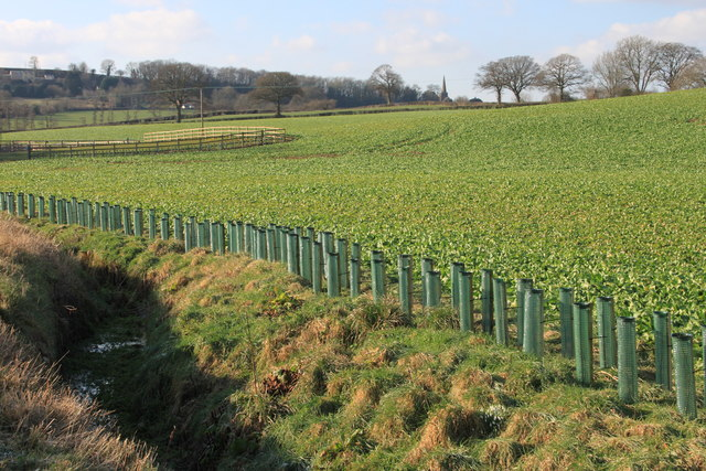 New hedge along the Ell Brook and Woodend Lane