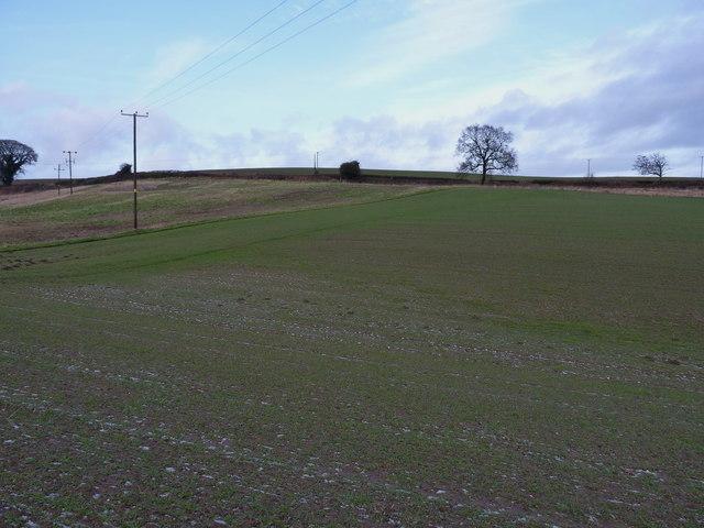 Footpath across winter wheat near Wigwig