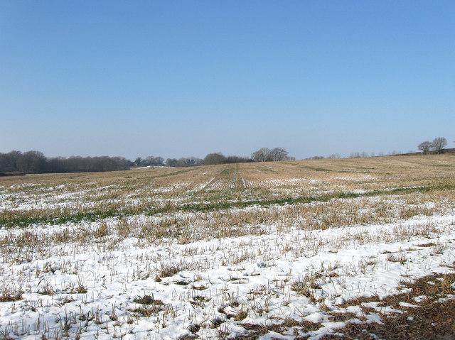 Broomy Field