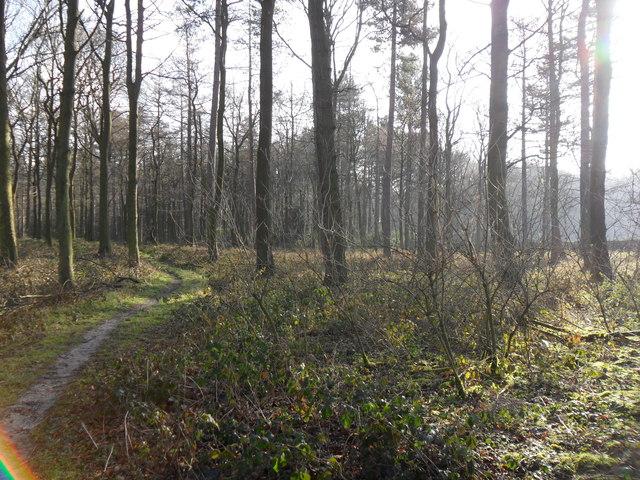 Lindley Wood, near Silkstone Common