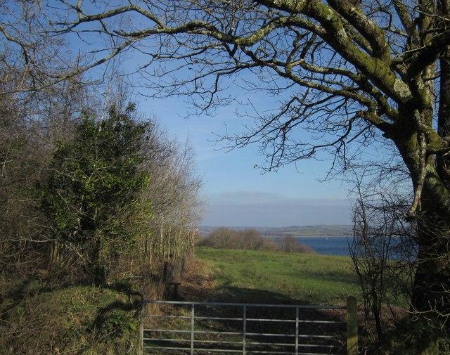 Meadow by Roadford Lake