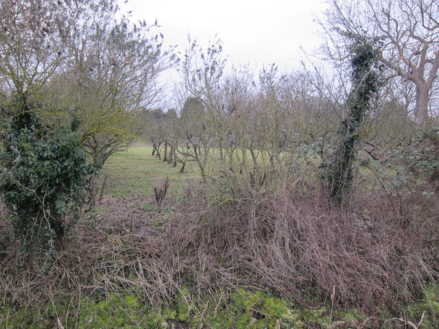 Small orchard in Little Thetford