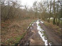 SU3942 : Test Way - Hartway Copse by Sandy B