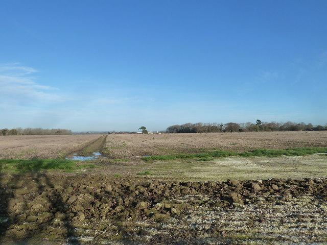 A circular walk around North Hayling (7)