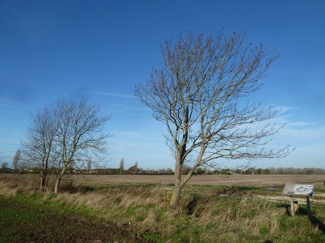 A circular walk around North Hayling (8)